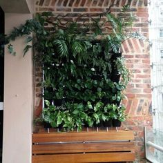 One square meter mini green wall with auto irrigation and gutter.  一平方米迷你型綠牆,配備自動灌溉和排水裝置  #greenwall #greenamic #wallpot #vertical #irrigation #gutter