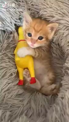 So Cute Baby Funny Cats Baby Sweet Cats Funny In 2020 With Images Cute Funny Animals Cute Baby Animals Cute Animal Videos