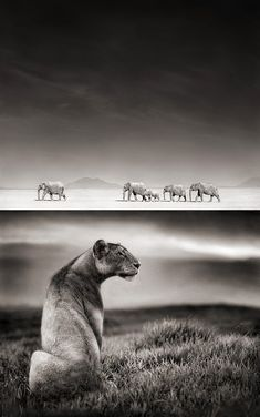 nick brandt, from eastern africa