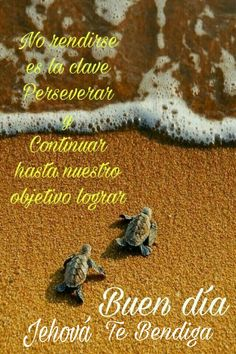 Gd Morning, Good Morning Quotes, Good Morning In Spanish, Jehovah, Encouragement Quotes, Good Night, Poems, Positivity, Humor