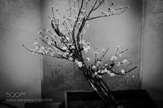 flower rondo by KenjiHiramatsu