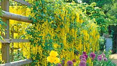 Image result for trellis with flowers