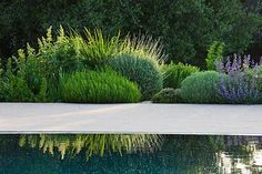 DESIGNER JAMES BASSON, SCAPE DESIGN, FRANCE l Clive Nichols  Mix of structural and natural plant forms