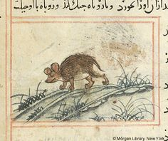 Bestiary, MS M.500 fol. 52v - Images from Medieval and Renaissance Manuscripts - The Morgan Library & Museum
