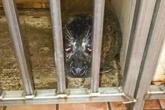 Save Marineland's Animals.After 12 years of working at Marineland as an animal trainer, I made the difficult decision to quit and speak out about the deplorable conditions and neglect I witnessed. PETITION JULY 2016