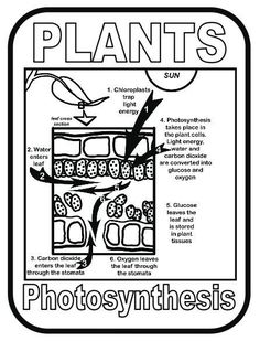 687 best Photosynthesis Lessons for Middle and High School