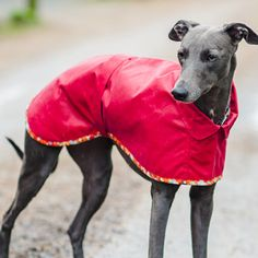 Waterproof Whippet Dog Coat worn by the lovely Boo - it will keep your hound dry and warm on wet walks - www.redhoundfordogs.com