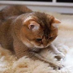 (GIF) Katze müsste man sein (gerade am Montag)