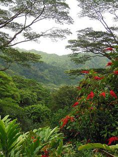 Hawaiian Rain Forest - Lyon Arboretum, Manoa Valley, Honolulu, Hawaii