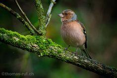 Landschaftsfotografie Schweiz | Naturfotografie Schweiz | Makrofotografie Schweiz | Thomas Ruf | Fotograf Muttenz - Basel