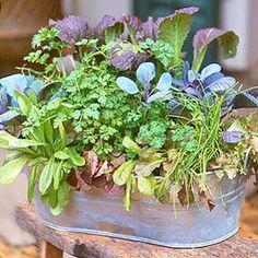 Mixed Salad Greens Container Garden