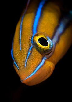Underwater Photographer Debi Henshaw's Gallery: