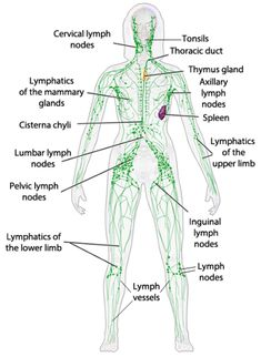 Junes 30 day challenge rebounding rebounding pinterest lymph system simplified ccuart Image collections