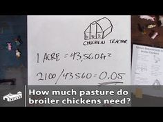 How much pasture do broiler chickens need? - PPP#1 S1:E2 - YouTube
