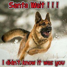 German Shepherd Dog: Santa wait!