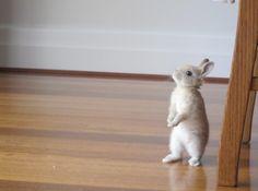 I already HAZ 'Rabbit Ears,' K?