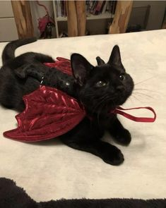 I found the tiniest Dragon!! 🥰 : aww Cute Little Animals, Cute Funny Animals, Photo Chat, Cat Costumes, Costume Ideas, Kitty Costume, Clever Costumes, Cute Creatures, Pretty Cats