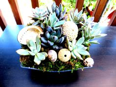 Quantity (10) Something Blue Succulent Plant Wedding Centerpiece with Opal, Purplish Gray, and Blue Plants 9 x 9