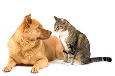 Cat and Kitten Care | SPCA Auckland
