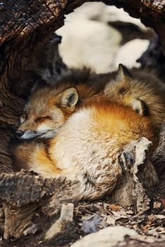 Fox Village by Lauren Elizabeth Pirie Bath