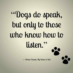 """Here is a list of 137 Best Dog Quotes & Sayings. Dog Quotes & Sayings """"Happiness is a warm puppy. I Love Dogs, Puppy Love, Cute Dogs, Yorkies, Chihuahuas, Beagles, Schnauzers, Schnauzer Puppies, Puppies Puppies"""