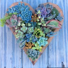 LARGE Hanging Heart Succulent Vertical by SucculentWonderland Succulent Bowls, Succulent Frame, Vertical Succulent Gardens, Succulent Planter Diy, Hanging Succulents, Succulents In Containers, Succulents Garden, Growing Succulents, Inside House Plants