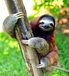 Happy sloth.
