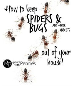 How to get rid of spiders, bugs & other common insects in your house - Spend With Pennies Diy Cleaning Products, Cleaning Hacks, Diy Products, Deep Cleaning, Get Rid Of Spiders, Bug Off, Insecticide, Mosquitos, Home Hacks