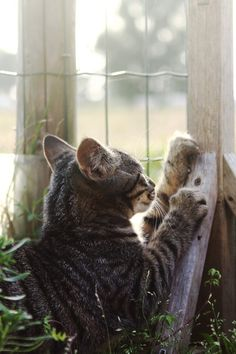 """""""She moved though the garden in glory because she had very long claws at the end of her paws."""" --Richard Garnett"""