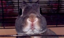 Rabbit Face Animal Photo