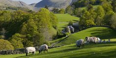 Troutbeck Valley: See that cottage way off in the distance? We would like to live right there, thank you very much. English Country Cottages, English Countryside, Country Life Magazine, Yorkshire Dales, Yorkshire England, Lake District, London England, Oxford England, Cornwall England