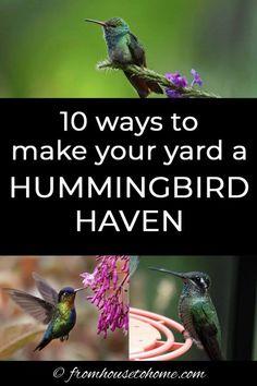 Hummingbird Drawing, Hummingbird House, Hummingbird Nectar, Hummingbird Flowers, Hummingbird Photos, Hummingbird Tattoo, Hummingbird Cake, Hummingbird Symbolism, Hummingbird Habitat