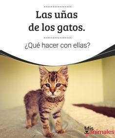 Las uñas de los gatos. ¿Qué hacer con ellas? - Mis animales  Proteje tus muebles y tus manos, te damos algunas recomendaciones para que sepas qué hacer con las uñas de los gatos.