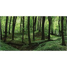 Use the Forest Backdrop to create a great enchanting themed setting. The Forest backgrounds come in three great materials and six sizes.