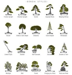 Top Bonsai Tree Care Products: As you may have gathered bonsai trees must be trained, shaped and pruned regularly. Choosing the necessary bonsai tools is no Bonsai Tree Types, Bonsai Tree Care, Indoor Bonsai Tree, Bonsai Plants, Bonsai Garden, Garden Plants, House Plants, Bonsai Pruning, Plantas Bonsai