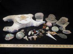 Various Sea Decor, Seashells, Stones, Shark Teeth, Coral