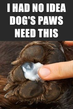How to Protect Your Dog's Paw Pads And Prevent Injuries Dog paws are as vulnerable as human feet, and like ours, they need to be taken care of all year around. Keep your dog's paws healthy and protected with the this simpe dog care tip. Dog Paw Pads, Dog Paws, Pet Dogs, Dachshund Puppies, Dachshunds, Dog Health Tips, Pet Health, Puppy Care, Pet Care