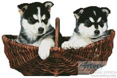 Husky Puppies - cross stitch pattern designed by Tereena Clarke. Category: Dogs.