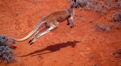 Check out the five ways to cross the Red Centre
