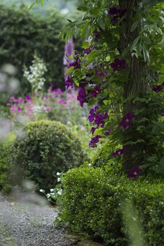 all in Bokeh Garden Trees, Garden Paths, Garden Landscaping, Purple Garden, My Secret Garden, Secret Gardens, Dream Garden, Garden Inspiration, Botanical Gardens