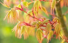 Everything you need to know about choosing and growing the right tree for your   garden