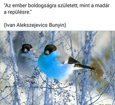 Touch, Bird, Quotes, Animals, Quotations, Animales, Animaux, Birds, Animal