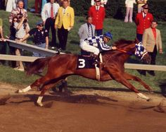 """That stride!! 1972 and 1973 Horse of the Year """"Secretariat"""" (1970 to 1989). 21:16-3-1 Secretariat was the first 2-year-old to hold the Horse of the Year title!"""