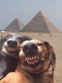 Funny Animal Jokes, Funny Dog Memes, Cute Funny Animals, Animal Memes, True Memes, Stupid Memes, Funny Dog Fails, Memes Humour, Lame Jokes