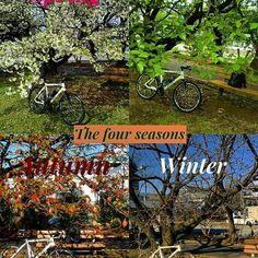 【teraotakuya】さんのInstagramをピンしています。 《今日は休みでしたが、ほぼ1日引きこもり。寒すぎ、春恋しい。 #四季#fourseasons #桜#八重桜#cherryblossom #自転車#自転車のある風景 #自転車のある生活 #サイクリング#ポタリング#クロスバイク#bicycle#bike#cycling#cyclinglife #scott #sub30》