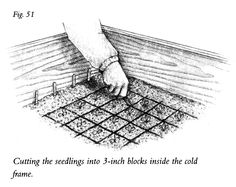 Gardening Tips from Eliot Coleman: How to Start Seedlings in a Cold Frame Cold Frame Gardening, Garden Soil, Edible Garden, Garden Beds, Organic Gardening, Gardening Tips, Vegetable Gardening, Eliot Coleman, Heating A Greenhouse