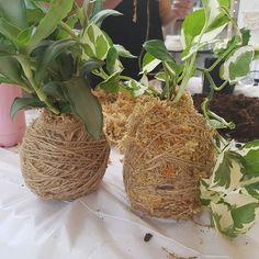 Another craft workshop at @littlelaneworkshops today I have made some kokedama balls