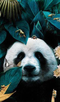 Illustrations Discover Animals And Pets Cute Animals Panda Wallpapers Panda Love Panda Bear Tier Fotos Animal Wallpaper Art Design Illustrations And Posters Most Beautiful Animals, Majestic Animals, Beautiful Creatures, Panda Wallpapers, Cute Wallpapers, Nature Animals, Animals And Pets, Wild Animals Photography, Panda Art