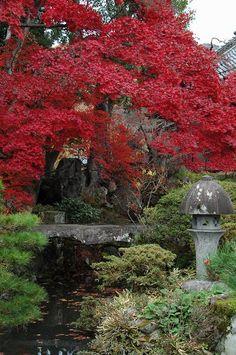Japan -- garden Indoor Garden, Outdoor Gardens, Zen Gardens, Beautiful Landscapes, Beautiful Gardens, Japanese Plants, Japanese Gardens, Architectural Plants, Japan Garden