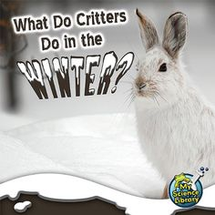 What Do Critters Do in the Winter? (My Science Library) by Julie K. Lundgren http://www.amazon.com/dp/1617419486/ref=cm_sw_r_pi_dp_P04Uwb00KDAYP